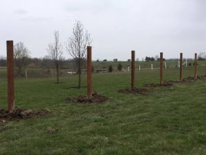 Fence posts by Level Posts